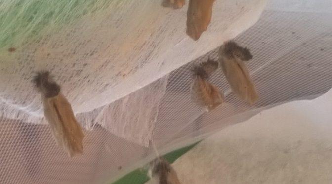 Schmetterling-Projekt